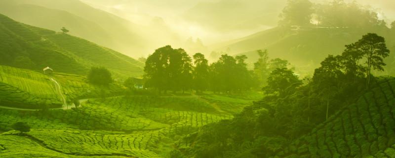 World Tea Academy