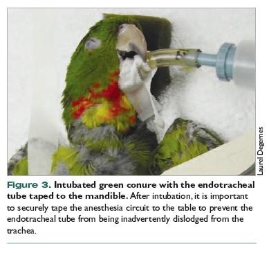 Anesthesia for Companion Birds - VetFolio