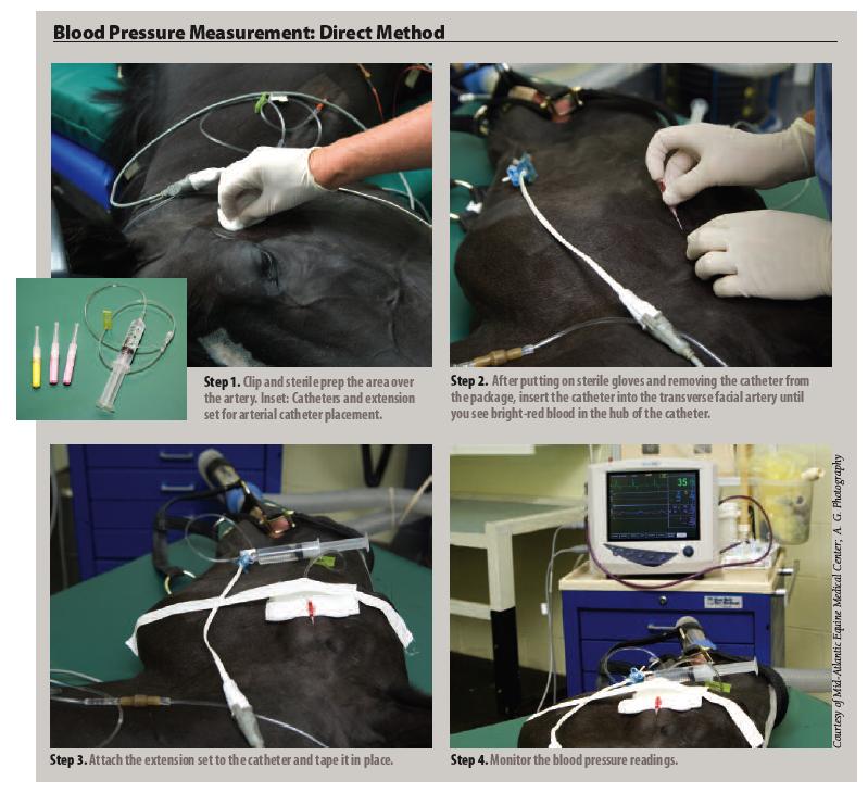 Equine Essentials — Arterial Blood Pressure Monitoring