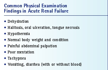 Acute Renal Failure Causes And Treatment Vetfolio