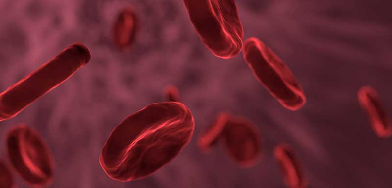 Hemophilia: Prophylaxis, Adherence, and Transitioning: Challenges in Young Adults